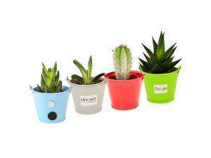 Mini plantes personnalisables